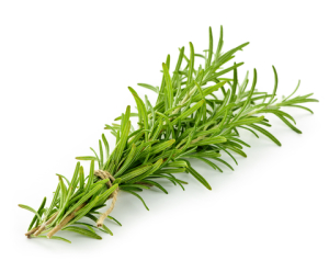 http://www.dreamstime.com/stock-photos-rosemary-sprigs-image16305393